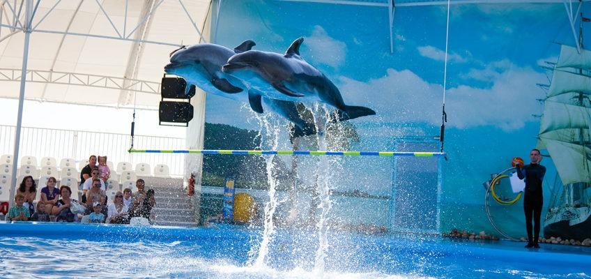 Поездки в Одессу. Дельфинарий. Комфортный отдых с Днепр-Море.
