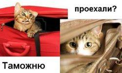 Правила перевозки животных внутри страны и через границу