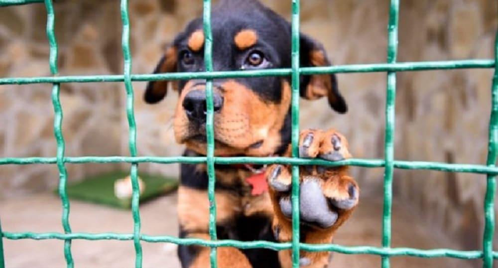 Харьковский центру обращения с бездомными животными