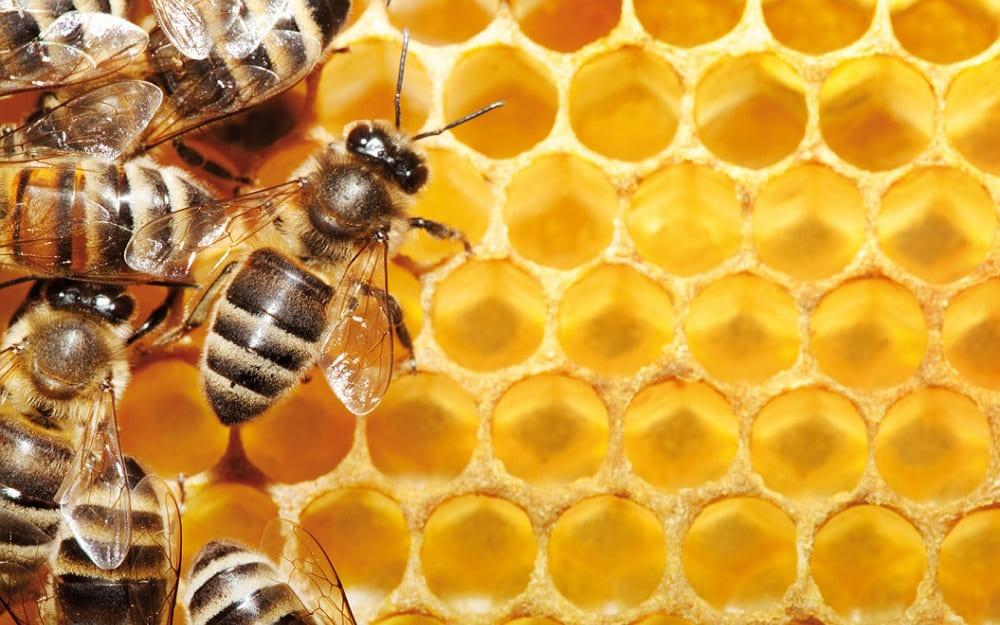 """Экскурсия """"Правильный мёд"""" - музей пчеловодства г. Харьков"""